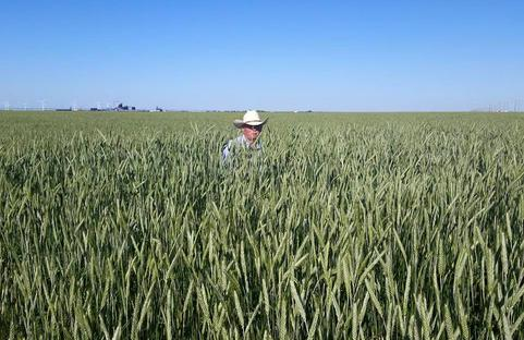 seed inc products triticale